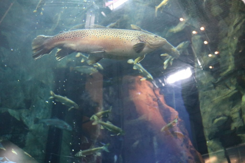 Great Things About The Great Lakes Aquarium Duluth Mn