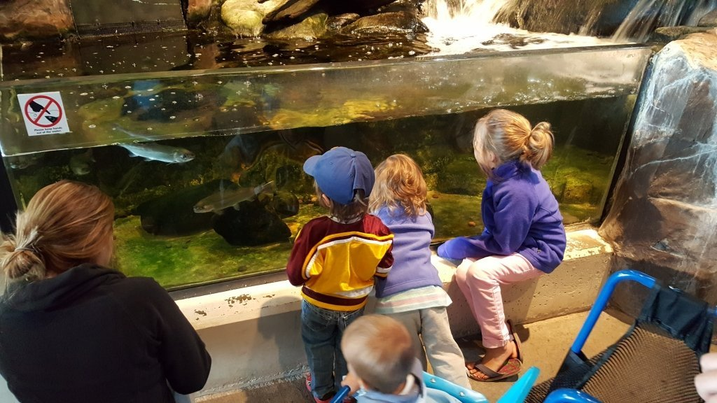 great lakes aquarium tank