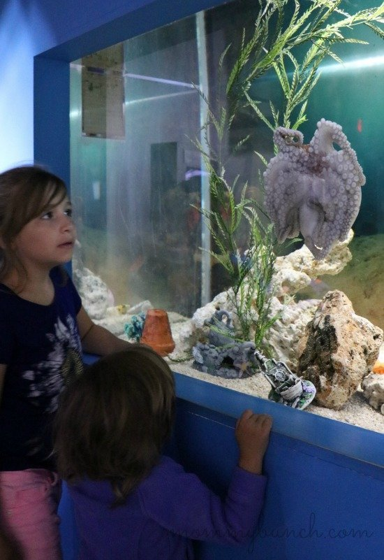 octopus great lakes aquarium