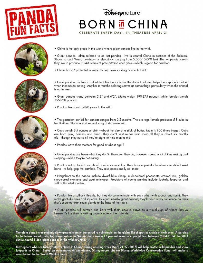 Panda Animal Facts - Born In China