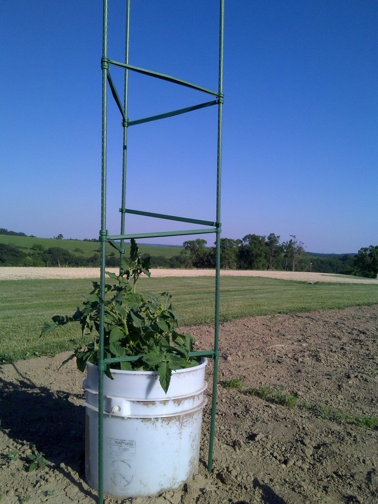 What does your tomato cage say about you?