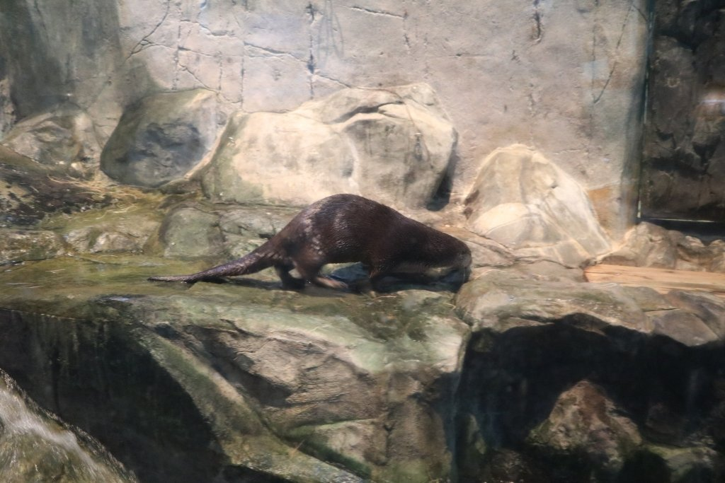 Otter Cove great lakes aquarium