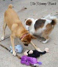 Loving pets emmie2