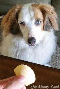 Loving Pets Watson