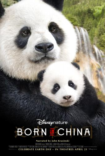 In celebration of the new Disneynature film, Born In China, opening everywhere on April 21st I'm sharing some fun panda facts and a new clip from the movie!