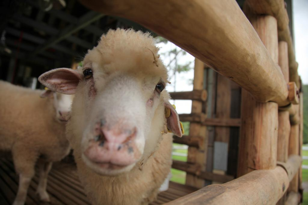 Best Things To Do On Long Island – Queens County Farm Museum