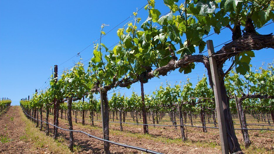 wine tours on long island