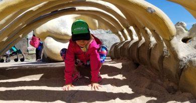 Why You Should Visit Assiniboine Park Zoo