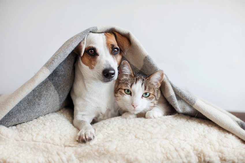 Pet Insurance: Is It Actually Worth It For Your Family?