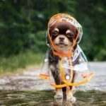 Pool Care 101: How to Keep Your Pets Safe Poolside