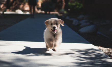 5 Frugal Ways to Puppy-Proof Your Home