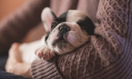 What To Remember Before You Bring Home A Puppy