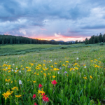 Here Are Some of the Best Ways to Get Outside This Summer